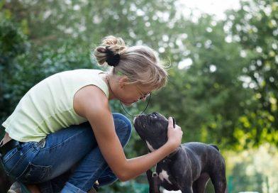 aliment toxique pour chien