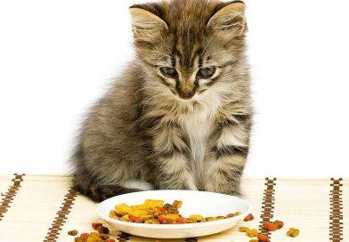 Le Saviez-Vous : Les Chats