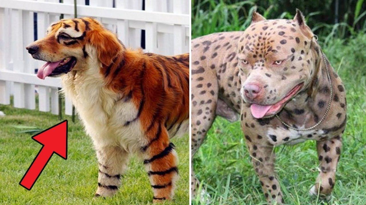 Große Hunde Rassen