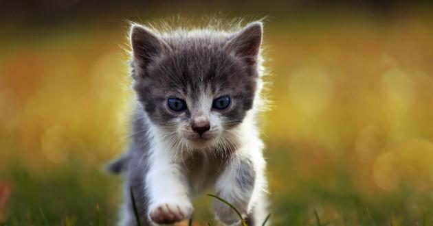 chaton dans les champs