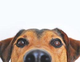 alimentation de son chien